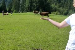 Wir servieren auch ganze Kühe...